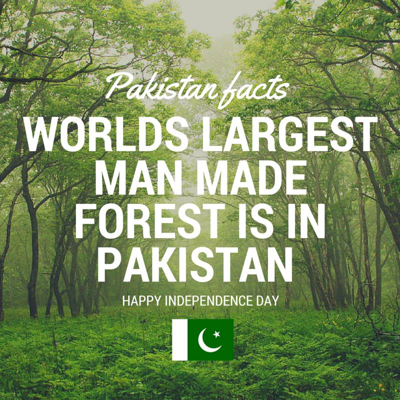 Pakistan Facts: World's largest man made forest is in Punjab, Pakistan.